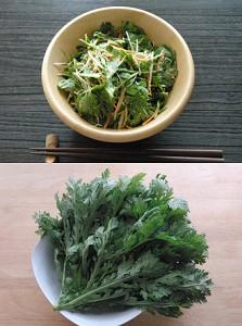 緑の薬味サラダ