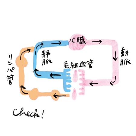 むくみiro_biteki_1_2