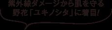 紫外線ダメージから肌を守る野花「ユキノシタ」に着目!