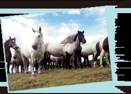 熊本産の食肉用の馬は上質な脂が乗ってる!