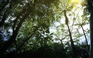 yanbaru_landscape_1of1