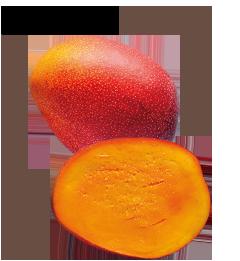 肌に潤いを与えるフルーツといえばマンゴー!