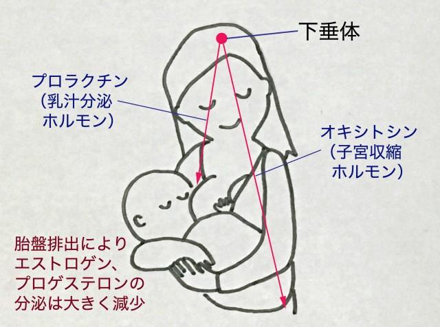 産後の生理開始はいつから?産後うつの対処法は?