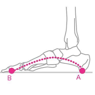 健康な足には3つのアーチがある