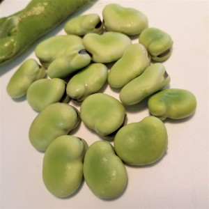 栄養満点!空豆サラダ