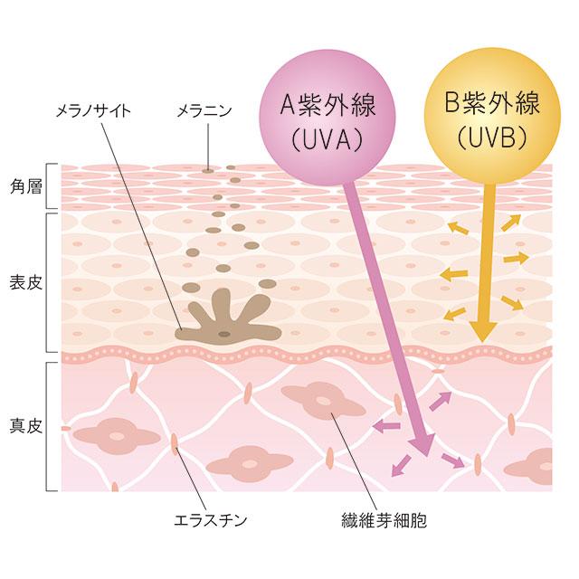 紫外線の種類はUVBとUVAがある